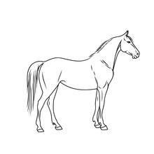 Elegant Horse Done In A Minima...