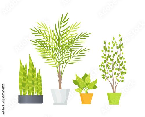 Indoor Floor Plants in Pots Isolated Illustrations - Buy this stock ...