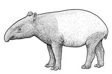 Malayan Tapir Illustration, Drawing, Engraving, Ink, Line Art, Vector