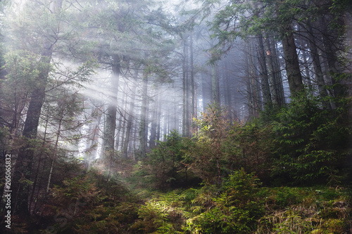 Fototapeten Wald Fantastic forest glowing by sunlight. Location: Carpathian, Ukraine, Europe.