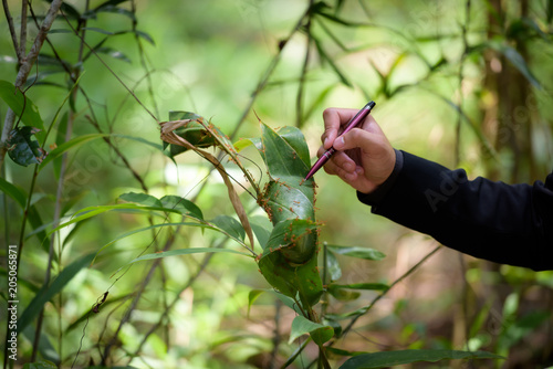 Fotografía  The hands of Animal researchers are checking ants in the woods.