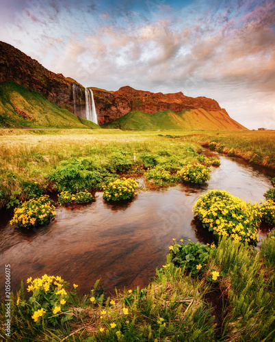 Foto op Aluminium Scandinavië Lovely view of blooming green field. Location place Seljalandfoss waterfall, Iceland.