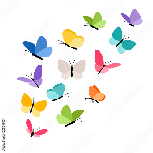 Fototapeta  Butterflies in flight