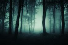 Dark Foggy Road, Scary Woods Landscape
