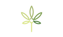 CBD Cannabis Marijuana Pot Hemp Leaf With Line Art Style Logo Design