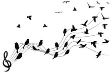 Birds Musical Notes Background
