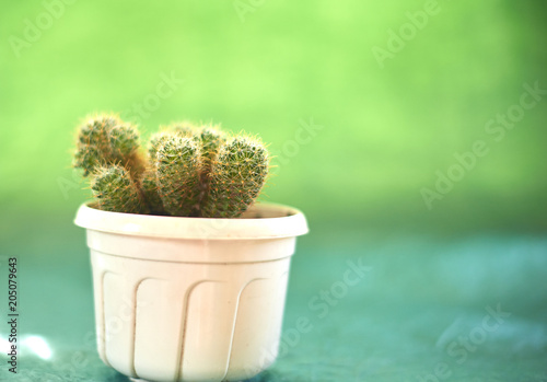 Foto op Plexiglas Cactus Cacti in pots on a green background