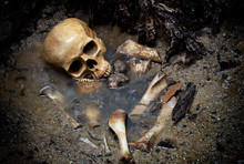 Skull And Bones In Pit Which H...