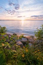 Lake Sunset: Pastel Sunset Over Lake With Flowers On Shore