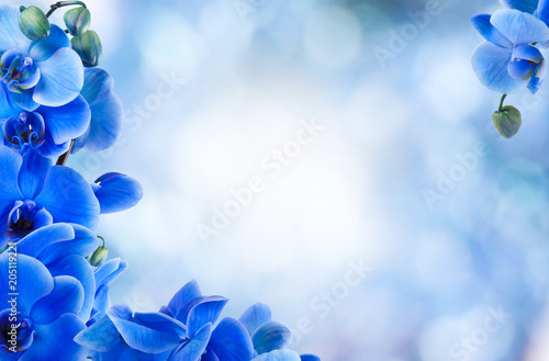 bouquet of blue orchids on the bottom