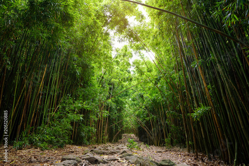 In de dag Bamboo Path through dense bamboo forest, leading to famous Waimoku Falls. Popular Pipiwai trail in Haleakala National Park on Maui, Hawaii