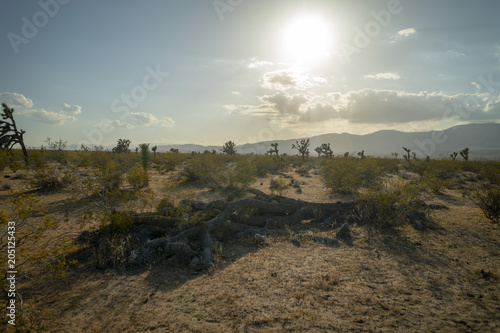 Foto op Plexiglas Donkergrijs Joshua Tree, Mojave Desert, desert