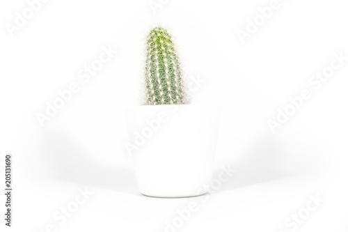 Staande foto Cactus Kaktus