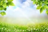 Fototapeta Na sufit - Wiosene tło, widok na trawę, kwiaty oraz na łąkę z pięknym rozmyciem bokeh