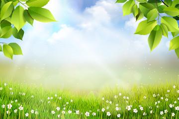 Naklejka Na szybę Wiosene tło, widok na trawę, kwiaty oraz na łąkę z pięknym rozmyciem bokeh