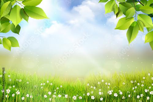 Fototapeta Wiosene tło, widok na trawę, kwiaty oraz na łąkę z pięknym rozmyciem bokeh obraz