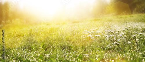 Fényképezés Gras im Frühling