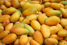 Fresh Mango In Pile In The Har...