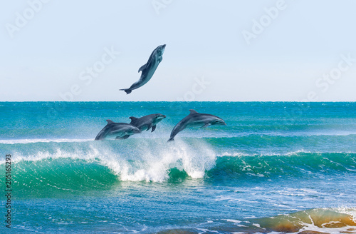 Photo sur Aluminium Dauphin Group of jumping dolphins, beautiful seascape and blue sky