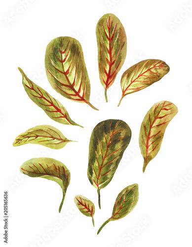 Watercolor bright leaves of  arrowroot Wallpaper Mural