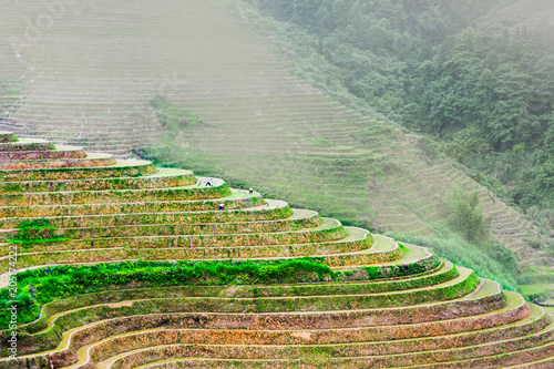 In de dag Asia land Stunning scenery of Chinese rice terrace near Guilin