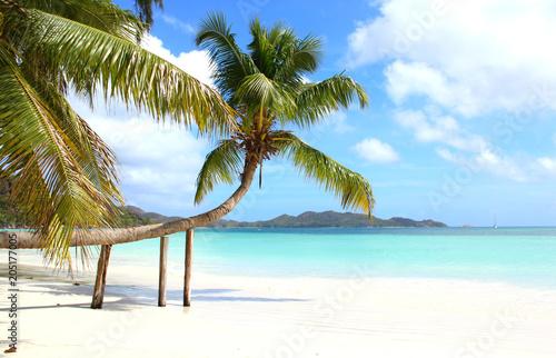 cocotier sur une plage des Seychelles