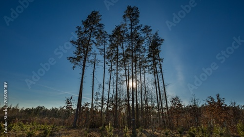 Foto op Aluminium Nachtblauw Early spring forest landscape.