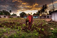 Yongoro, Sierra Leone, West Af...