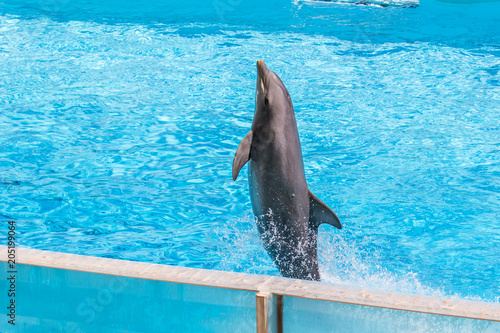 In de dag Dolfijn Playing with dolphins