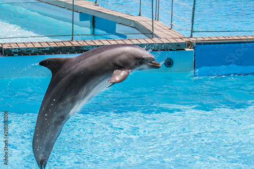 Foto op Plexiglas Dolfijn Playing with dolphins