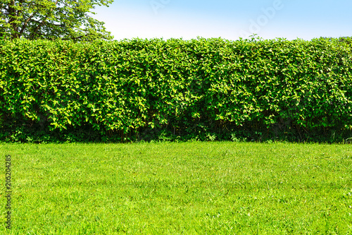 Montage in der Fensternische Lime grun Home garden landscape - a green lawn and a big hedge on a blue sky background.
