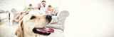 Fototapeta Fototapety ze zwierzętami  - Happy family sitting on couch with their pet yellow labrador in