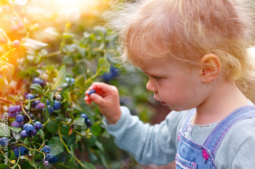 gather blueberries