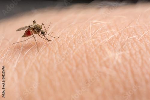 Mücke sticht in die Haut und saugt Blut