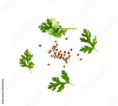 Foto op Canvas Aromatische coriander leaf and seeds isolated on white background