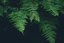 Green Fern Leaves Dark Nature ...