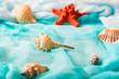 Seashells and starfish on cian background