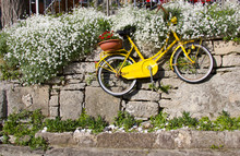 Old Vintage Yellow Bicycle Han...