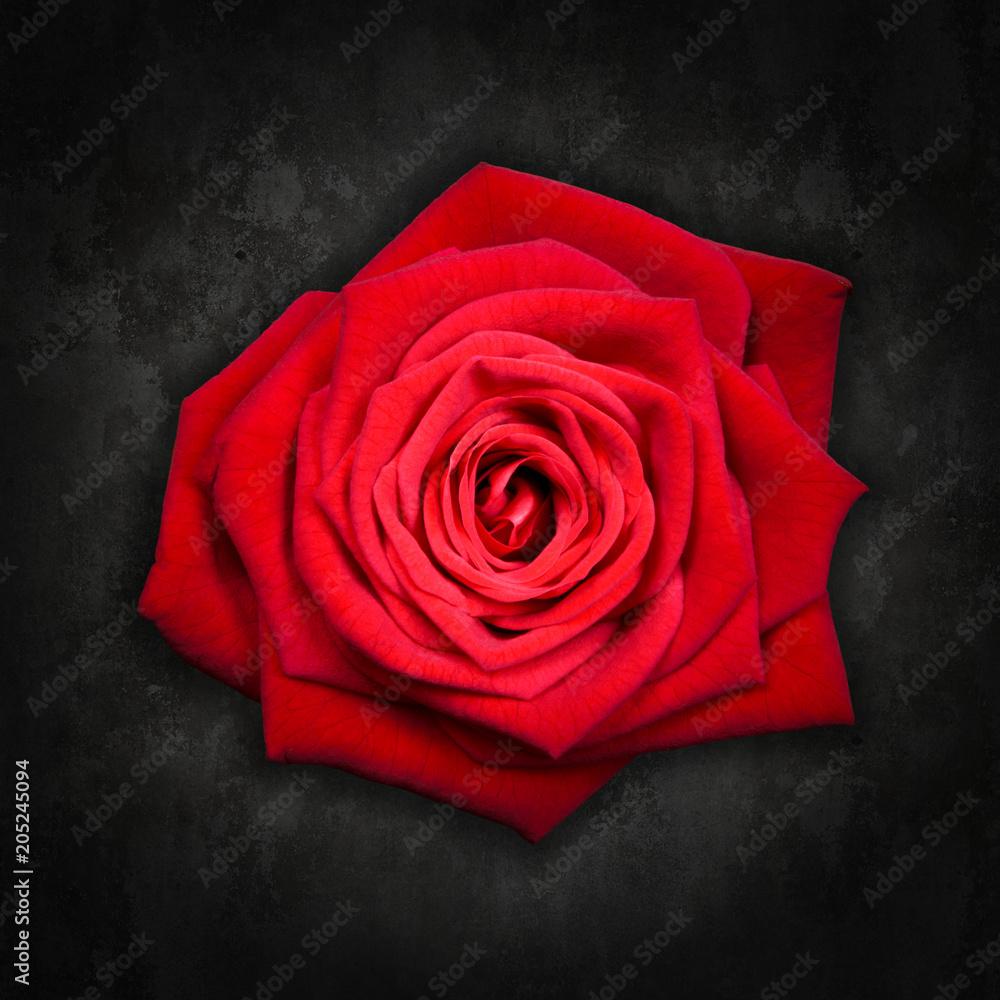 Photo Art Print Red Rose On Black Background Rosa Rossa Su