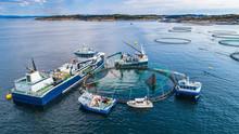Salmon Fish Farm In Fjord. Nor...