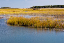 Salt Water Marsh In Murrells I...