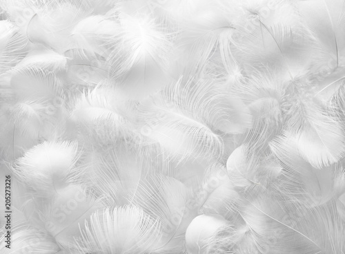 Fotografiet  Feather Group