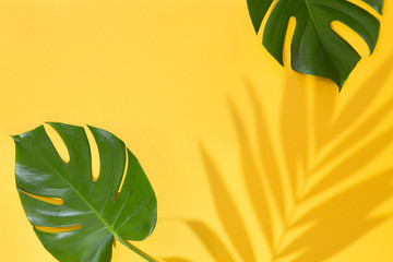Fototapeta na wymiar Top view of green tropical leaves Monstera and Areca on yellow background. Flat lay. Summer concept with palm tree leaf, copyspace. Vacation, holiday, travel, sun background