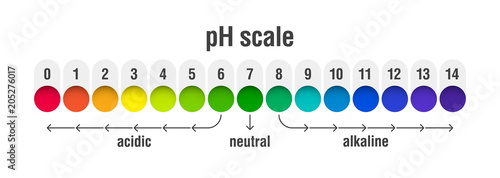 pH value scale chart for acid and alkaline solutions, acid-base balance infograp Wallpaper Mural