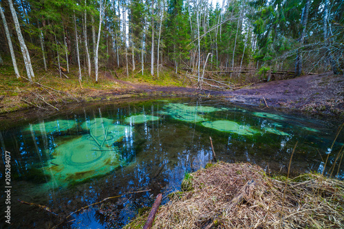 Fototapety, obrazy: Freshwater springs of Saula, Estonian landmark. Pure water and colored bottom of a pond in the forest.