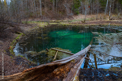 Freshwater springs of Saula, Estonian landmark. Pure water and colored bottom of a pond in the forest, bare fallen tree at the foreground