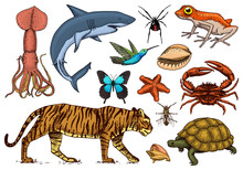 Set Of Animals. Reptile And Am...
