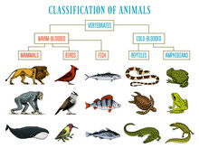 Classification Of Animals. Rep...