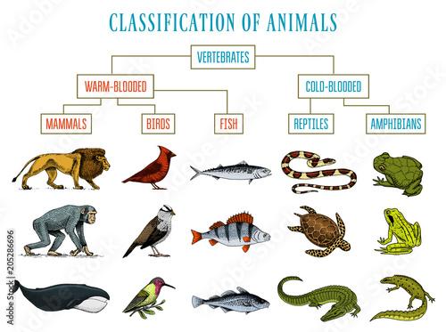 Classification of Animals Canvas Print