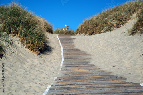 Staande foto Noordzee Holzpfad zwischen den Sanddünen